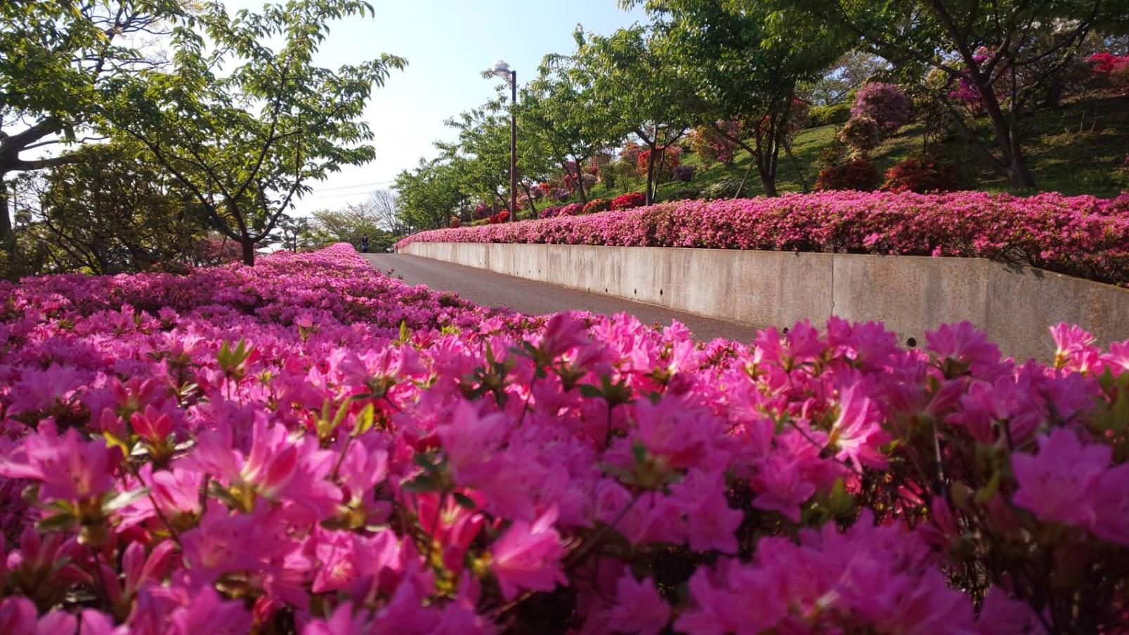 江戸川区なぎさ公園